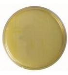 агар фенилаланин сухой 0,1 кг