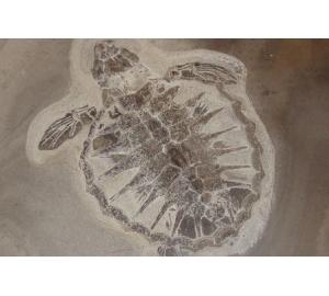 Белок возрастом 54 миллиона лет доказал устойчивость подобных молекул